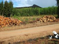 Woodpile on Bennachie.jpg
